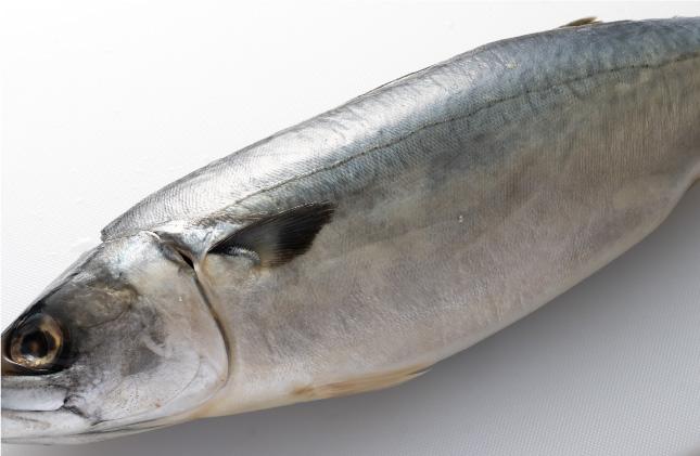 鯖・鮭を3枚におろす